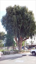 Image for Bicentennial Celebration Tree Dedication - Coachella, CA