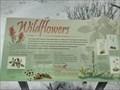 Image for Wildflowers - Banff, Alberta
