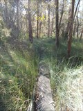 Image for Callala Bushcare Wetland Boardwalk - Callala Bay, NSW