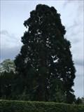 Image for Séquoia géant - Saint Dié des vosges - France