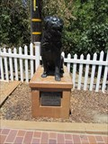 Image for Bosco the Dog - Sunol, CA