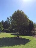 Image for 9/11 Tree - San Rafael, CA