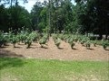 Image for Winthrop Park Rose Garden - Tallahassee, FL