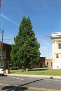 Image for Constitution Tree - Asheboro, NC