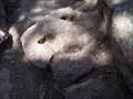 Image for Dinosaur Foot Print - Devil's Head Trail - Douglas County, Colorado