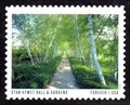 Image for Birch Tree Allée, Stan Hywet Hall & Gardens, Akron, OH