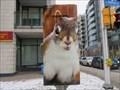 Image for Squirrel - Ottawa, Ontario