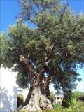 Image for Oliveira do bairro da covina-Loures- Portugal