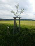 Image for Dedicated Trees-Appletree 'Grüner Stettiner' - 96352 Effelter/Germany/BY