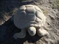 Image for Gopher Tortoise - Jacksonville Beach, FL