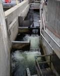 Image for Hiram M. Chittenden Memorial Locks Fish Ladder  -  Seattle, WA