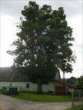 Image for Tree of the republic - Kerkov, Czech Republic
