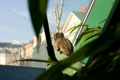 Schaut sich den Affenzirkus auf der Straße an ;-)