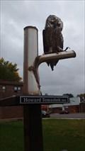 Image for Northern Saw-whet Owl - Houston, MN, USA