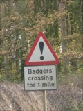 Image for Badger Crossing - Lamport, Northamptonshire, UK