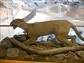 Image for LAST -- Eastern Mountain Lion - University Park, PA