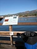Image for Harbor Fishes, Santa Barbara, CA