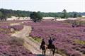 Image for Loonse en Drunense Nationaal Park - Waalwijk - NL