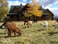 Image for Blue Moon Ranch Alpacas  - Woodland, UT