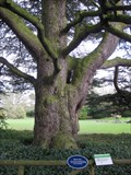 Image for Lebanese Cedar Tree - Stockwood Discovery Centre, London Road, Luton, Bedfordshire, UK