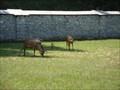 Image for Tierpark Rosegg, Kärnten - Austria