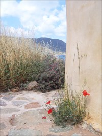 Some flowers on the island of Spinalonga.