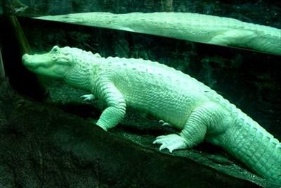 Audubon Aquarium of the Americas - New Orleans, LA - Public Aquariums ...