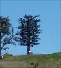 Image for Fir Tree - Fairfield, CA