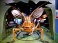 Image for Grasshopper - Boston, MA