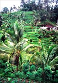 Image for The Heart of Bali - Indonesia