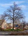 Image for Shoe Tree - Capelle aan den IJssel, NL