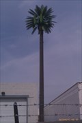 Image for Talking Tree - University & 38th - Phoenix, AZ