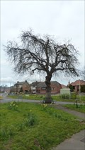 Image for Queen Victoria's Diamond Jubilee Tree - Hathern, Leicestershire