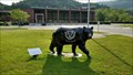 Image for Harlan County High School  Black Bear ~ Rosspoint, Kentucky.