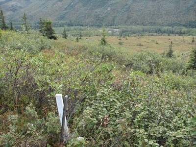 This image shows the mark just to the right of the white stake at the level of the surrounding foliage.  View is to the southeast.