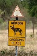 Image for Wild Dog  - Hwange, Zimbabwe