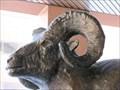 Image for Rocky Mountain Bighorn Sheep - Denver, CO