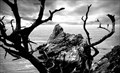 Image for Pinnacle Cove, Point Lobos, California