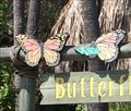 Image for Butterflies - Dana Point, CA