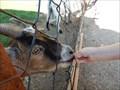 Image for Feed the animals - Killman Zoo - Caladonia, Ontario