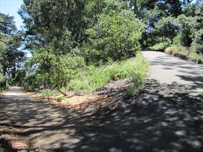 A Bend in the Path, Buena Vista Park, San Francisco, CA