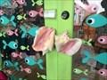 Image for Conch Shell Door Handle - Punta Gorda, Florida, USA