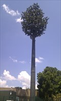 Image for Disguised Cell Tower, Lynwood Ridge,Pretoria
