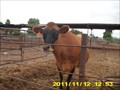 Image for Amy's Farm - Ontario, CA