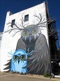 Image for Owls - Brenham, TX
