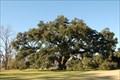 "Image for ""Randall Oak"" - New Roads, LA"