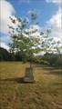 Image for Naval And Royal Marine Oak Tree - Tonge Mill Memorial Park - Tonge, Kent