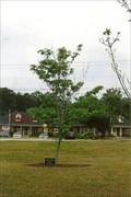 Image for Velma Stuckey - Douglasville, GA