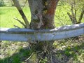 Image for Tree eats traffic barrier, Fuldatal, Germany