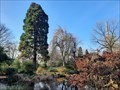Image for Mammutbäume im Japanischen Garten - Leverkusen, NRW, Germany